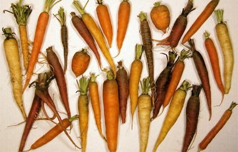 carrots-root-food-selection